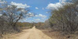 "Caatinga is an eco-region found only in the interior of northeastern Brazil. Caatinga comes from the Tupi language, meaning ""white vegetation"" or ""white brush."""