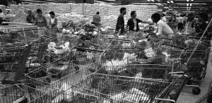 07-03-1986-movimento-no-supermercado-eldorado-nos-dias-que-se-seguiram-ao-plano-cruzado-em-sao-paulo-sp-1456520014617_615x300